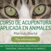 banner-acupuntua-animales-234