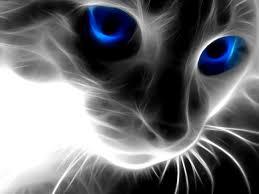 gato intuitivo