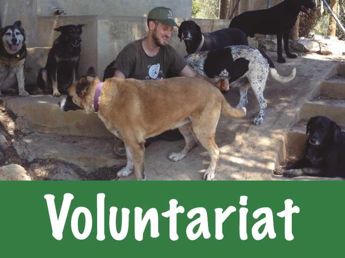 voluntariat trifolium